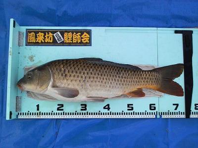 茨城県/北浦(宇崎) - 鯉釣り隊