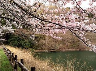 20170409_inaka koishi sama_3.jpg
