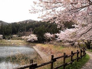 20170415_inaka koishi sama_4.jpg