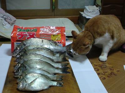 20100828_chinutaishousama_chinu.jpg