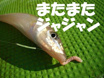 LB_kisu07.jpg
