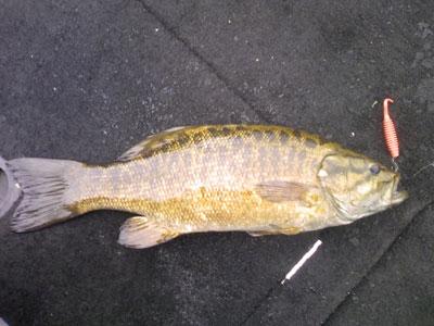 bass1_100709.jpg