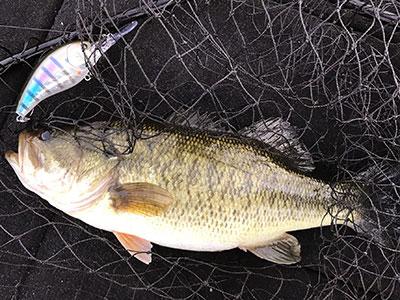 bass12_1124.jpg