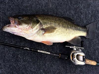 bass15_1222.jpg