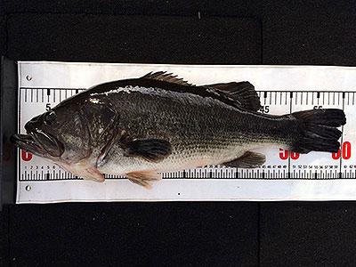 bass3_1126.jpg