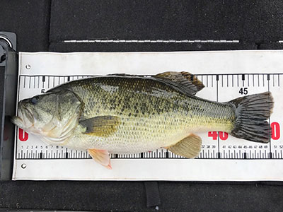 bass9_1013.jpg