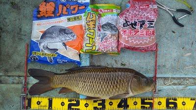 千葉県/手賀沼 流入河川 - 鯉釣り隊