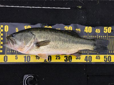 bass10_1102.jpg