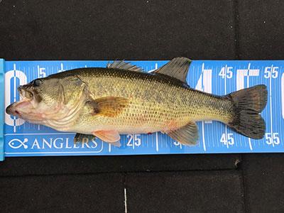 bass5_1206.jpg