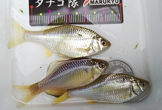 20190714_aoyamano aoyagisan sama_3.jpg