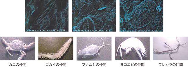 エサに付着していた微生物、および小動物